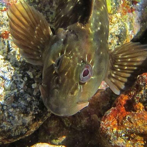 Under water camera on El Cabezo reef