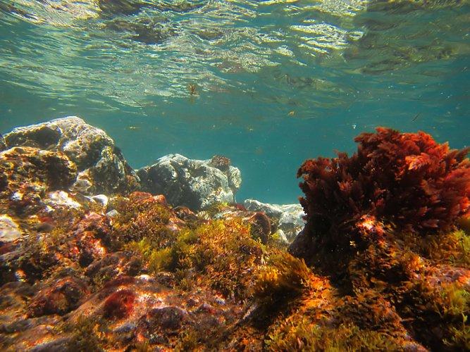 Under water camera on El Cabezo Godzilla reef